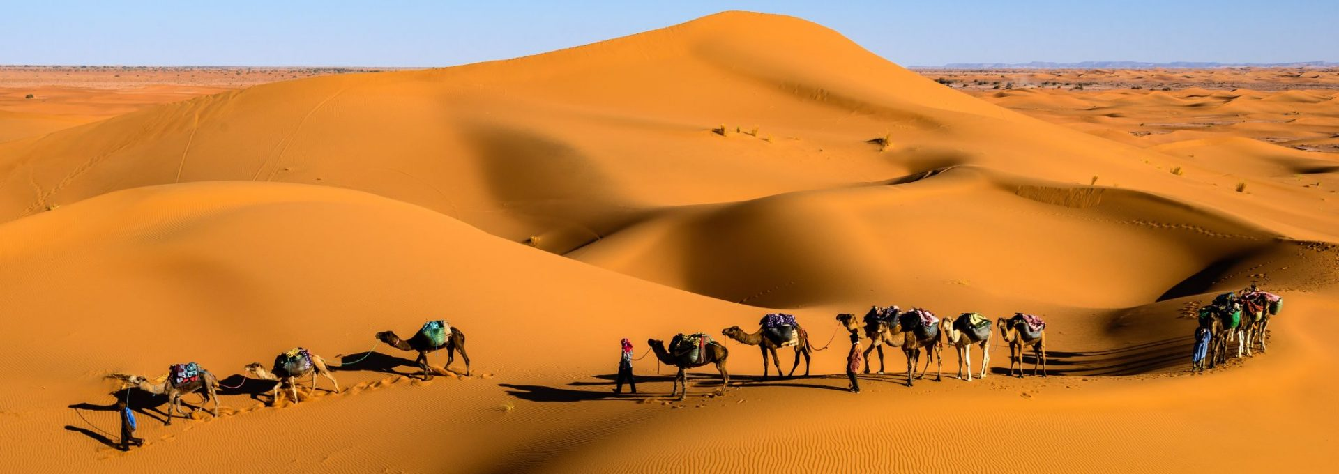 Roaming Camels Morocco