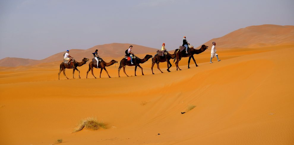camels and dune