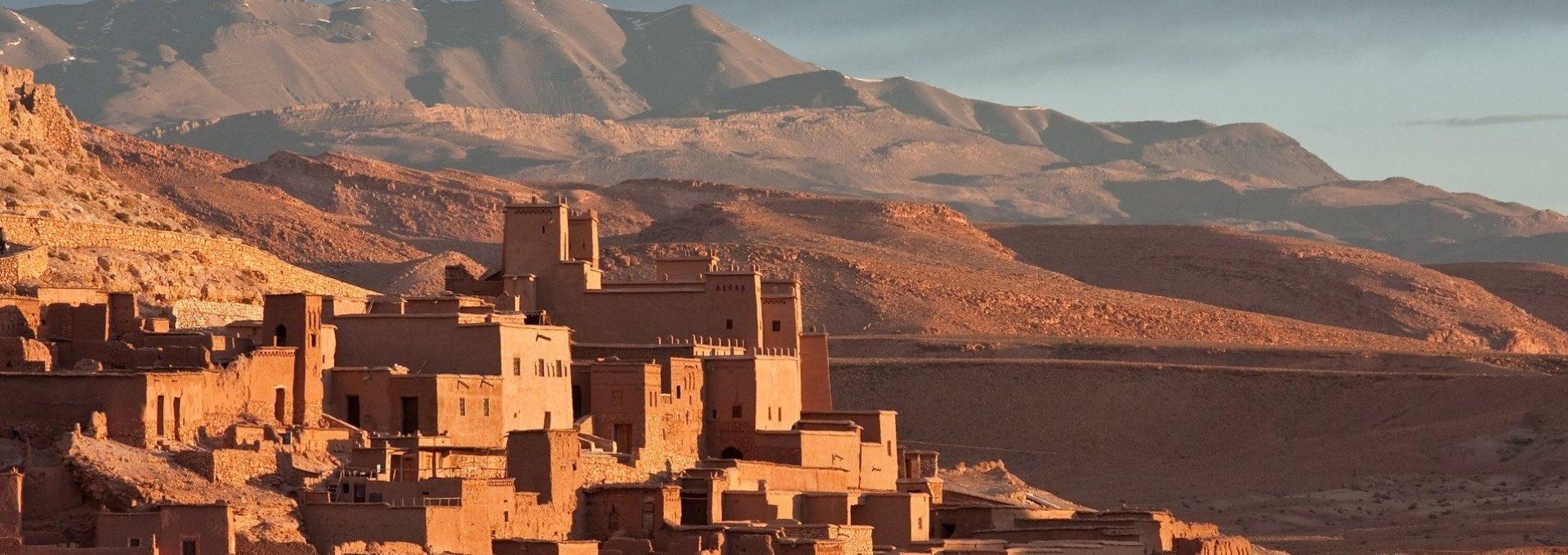 Roaming Camels Morocco